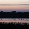 Pin Tail Ducks at the Cosumnes River Wildlife Refuge at Sunset