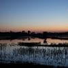 Wind Currents at Sunset at the Cosumnes River Wildlife Refuge