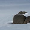 Stone Islands in a Frozen Echo Lake