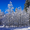 Snow Covered Aspens and Meadow at Fallen Leaf Lake