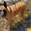 Tahoe Adventure Dog