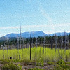 Reemergence of Spring Aspens in Fire Scarred Landscape