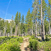 Tahoe Forest Trail