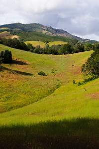 Mt Diablo State Park, California, May 2010.