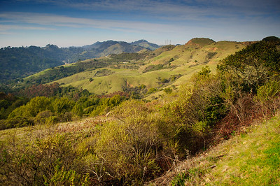 Sibley Volcanic Regional Preserve, Oakland, CA in February 2013.