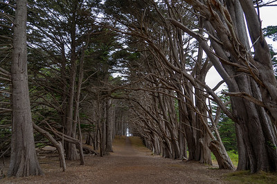 Tree tunnel at Fitzgerald Marine Reserve in Moss Beach, California. August 2018.