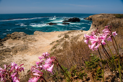 Mendocino Headlands, Mendocino, California in September 2017.