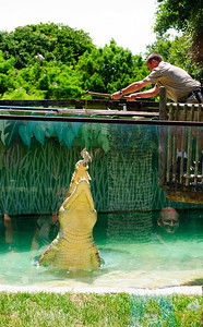 Crocodile, Maximo, feeding at St. Augustine Alligator Farm in St. Augustine, Florida in June 2010.