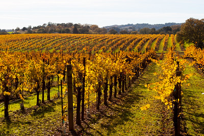 Chalk Hill/Alexander Valley, California in November 2012.