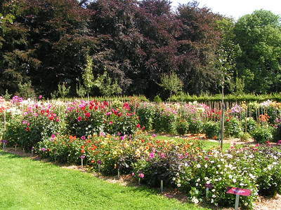 """""""De Dahlia-collectie"""" In Het Vrijbroekpark, de oogstfeesten. De maand augustus tooit het park in een overvloed aan kleur en smaak!"""