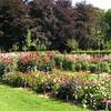 """""""De Dahlia-collectie"""" In Het Vrijbroekpark, de oogstfeesten.<br /> De maand augustus tooit het park in een overvloed aan kleur en smaak!"""