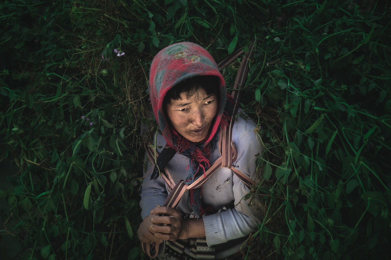 A Woman carries a load of vegetation for her farm animals in Bhutan