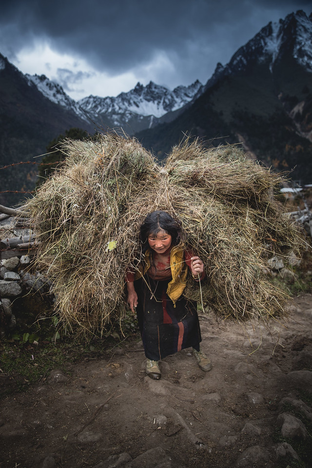 Woman Carrying A Load of Grass on Her Back