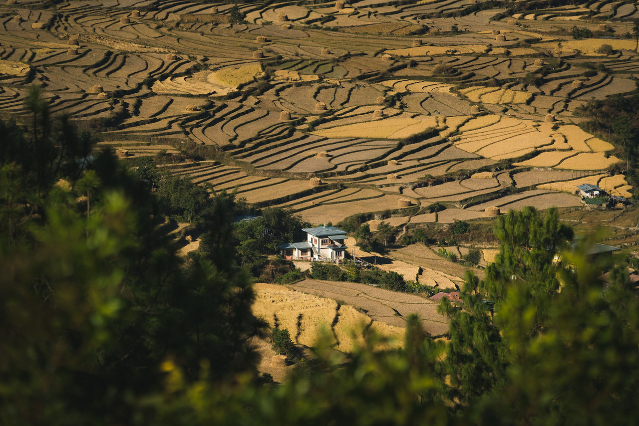 Rice Farmer House Bhutan