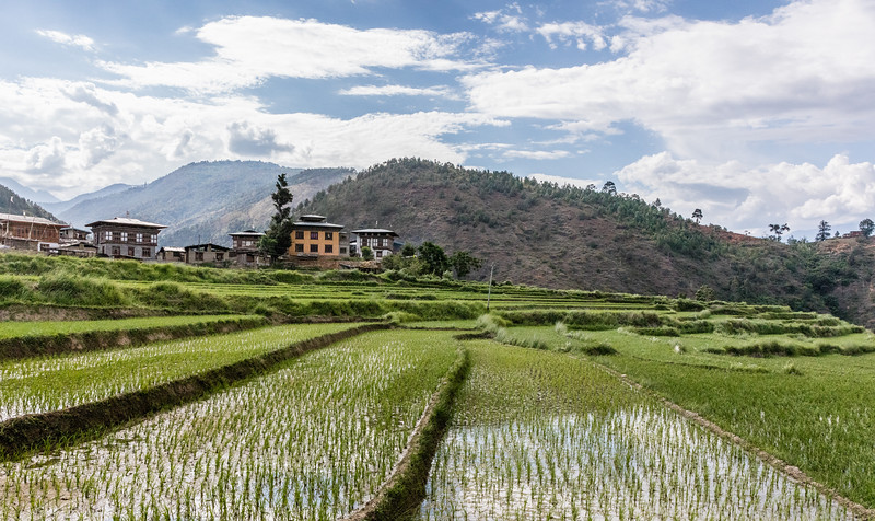 Sopsokha, Bhutan. Some of the rice fields that surround the hilltop Chhimi Lhakhang Monastery, with the village in the background.