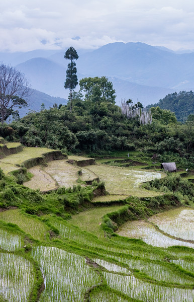 Above the Punakha Valley, Bhutan. Typically terraced rice fields in the steeply sloped mountains.