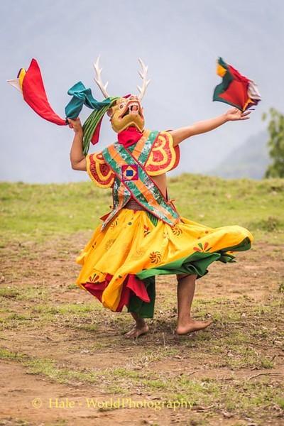 Brokpa Dancer - 15