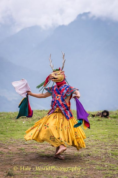 Brokpa Dancer - 3