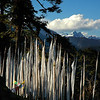 Prayer Flags at Dochu La Pass