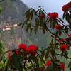 Taktshang Monastery (Tiger's Nest) with Rhododendron