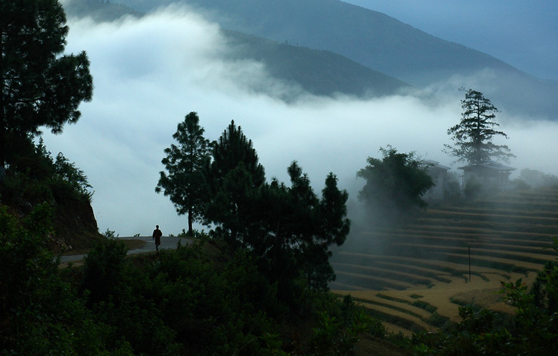 Early morning fog, rice terraces near Punakha