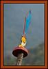 Trongsa Dzong, Trongsa