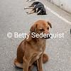 Lazy Street Dogs