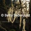 Moss on Trees on High Mountain Pass