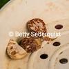 Peeled Betel Nut
