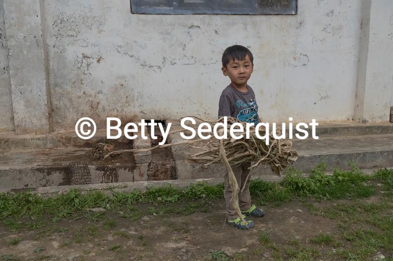 Child Carrying Bark from Daphne Tree, Bhutan