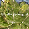 Betel Nut Leaves