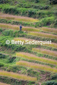 Scarecrow in Rice Paddies, Trongsa