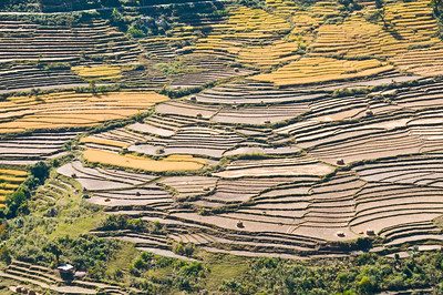 Punakha-terraced fields_3_DSC_6200
