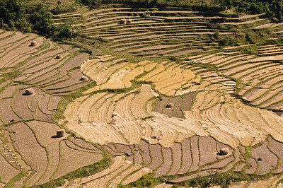 Punakha-terraced fields-2-DSC_6194
