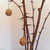 Bibich Winery - Pag Cheese Balls