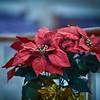 2016_Christmas-Village_0014