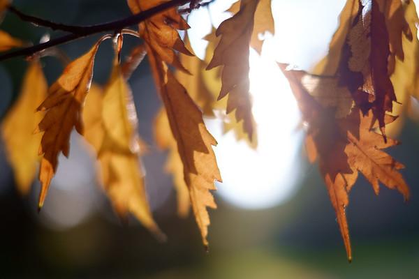 Leafy [#004]