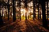 Forrest sunset | Zonsondergang in het bos [#026]