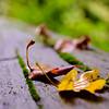 Fall, hard [#005]