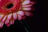 soft flower ballet [#001]