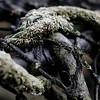 Strandjutten | beachcombing [#011]