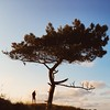 Lonely tree [#016]
