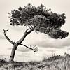 Lonley tree [#018]