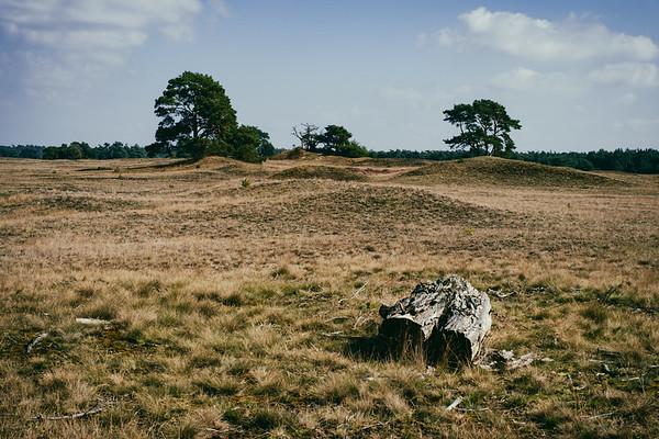 Nationaal park Veluwe(zoom) [#003]