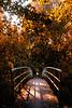 Bridge in golden light [#020]