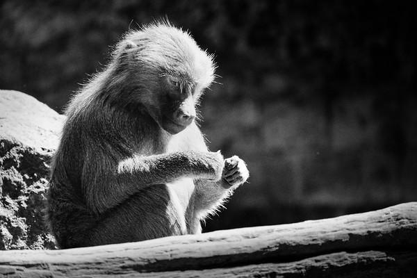 Relax! | Contemplating dinner [#011]