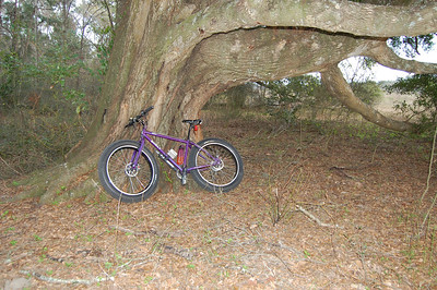 I head back onto Cellon Creek Loop's south section and pause at this sweet old oak. More photos - and hopefully video - coming up after tomorrow's ride.