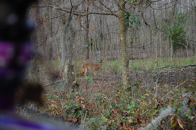 Just a bit after the last photo, I was approached by one of many semi-tame deer.