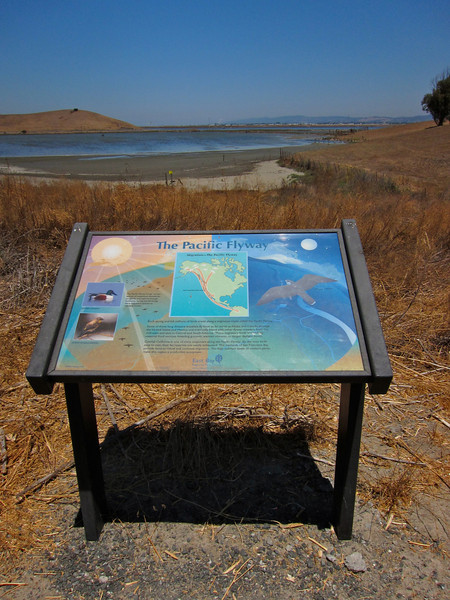 The Pacific Flyway - on the Alameda Creek Trail - Only 9 years to get back on the bike. 9 Miles today, 7 this past Monday. Average speed 11 mph, much better than the 7-8 I used to do on my first rides.