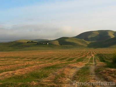 The Devil Mountain Double covers some of the most remote areas of the San Francisco Bay Area. This part of Livermore Valley, looking up to Morgan Territory, isn't very remote at all.